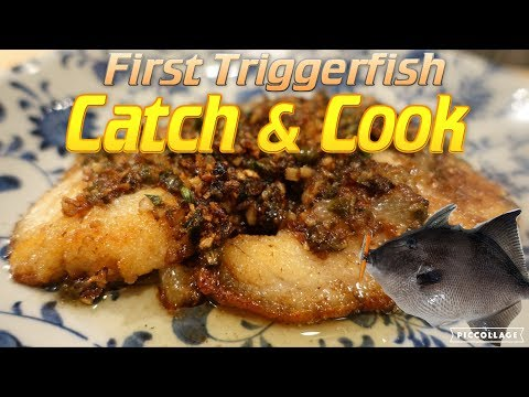 Triggerfish Catch And Cook!