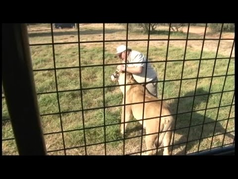 Inside the Lion Park Where American Was Mauled to Death