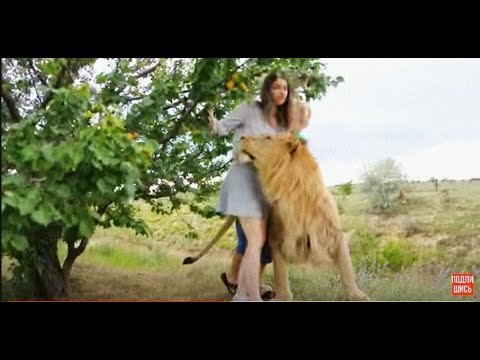 Девушка попала ко львам в Сафари и ей стало плохо !!!.The Girl Got Sick Surrounded By Lions
