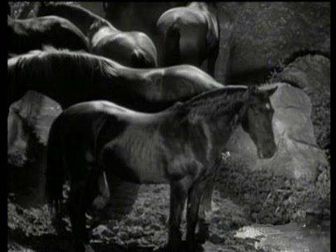 an examination of the movie the horse thief
