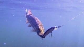 Видео о рыбалке(ПОДПИСЫВАЙТЕСЬ на канал - https://www.youtube.com/user/sappilot74 ДОБАВЛЯЕМСЯ в друзья http://vk.com/id348535885 ЗАДАЕМ ВОПРОСЫ в группе., 2013-11-16T16:44:17.000Z)