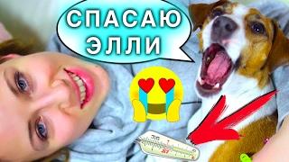 МОЯ СОБАКА МЕНЯ ЛЕЧИТ!!! - Я БОЛЕЮ ОТРАВИЛАСЬ ЕДОЙ - РЕАКЦИЯ СОБАКИ ДЖИНЫ | Elli Di Pets