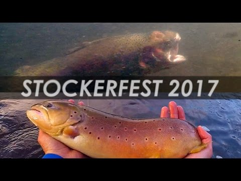 Underwater Trout Strike! - Fly Fishing for Huge Stocked Trout