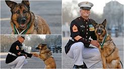 Wounded military dog awarded highest war medal in US