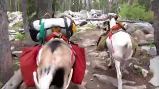 Pack goat:  Silas Lake, Going in (1)