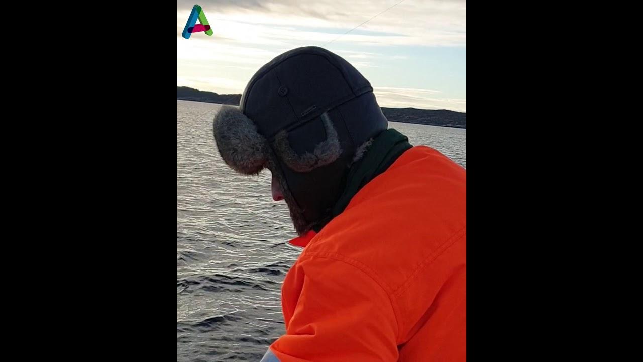 Rekord-gråhai utenfor Askøy
