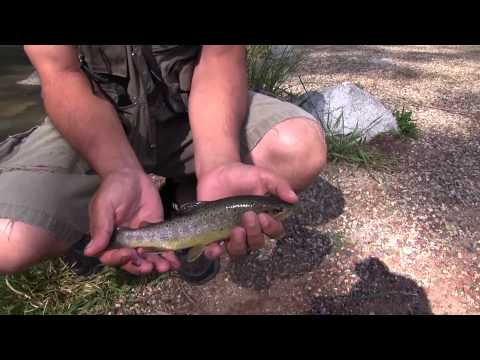 Cimarron River Trout Fishing