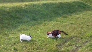「待て待て〜」ウサギと猫の追いかけっこ