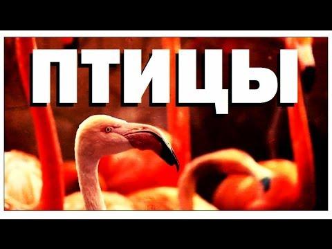 Вопрос: Какая общая характеристика птиц, питающихся живой пищей и падальщиками?