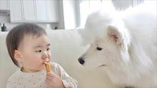 5 Things That Only Samoyed Owners Will Understand