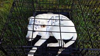 Пара нашла брошенного щенка в парке, подойдя ближе они увидели надпись на его голове