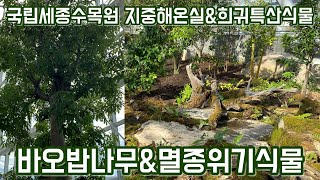 바오밥나무와 멸종위기 …