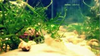 The Advanced Plant Aquarium, Tropical Aquarium Plants