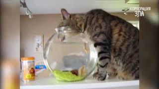 КОШКИ НЕНАВИДЯТ ВОДУ!   Смешные коты в воде ¦ Приколы с Котами и Кошками   ТОПовая подборка!