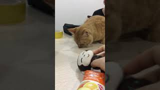 Mèo Maine Coon giống Goose trong Captain Marvel