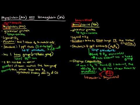Myoglobin and Hemoglobin (Compare and Contrast)