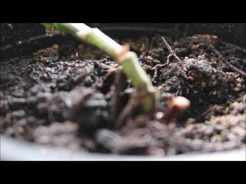 Pflanzen und Musik