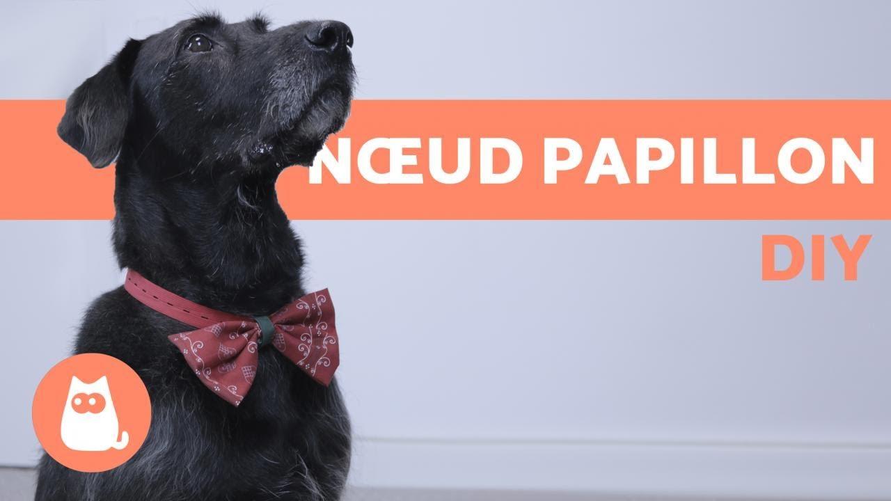 nuances de dernières conceptions diversifiées correspondant en couleur DIY : fabriquer un nœud papillon pour chien et chat - TRÈS FACILE
