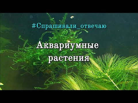 #Спрашивали_отвечаю Аквариумные растения