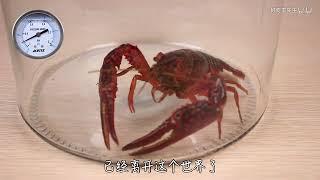 把一只小龍蝦放進真空罐裏,它竟然跳起了鬼步舞