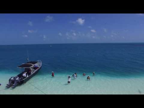 Arrecife Alacranes 2016