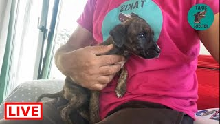 Good morning! ♥ The 2 puppies are doing well Takis Shelter