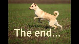 The end... Шарик шоу, как это было.