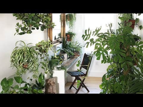 PLANT STYLING SECRETS:  SMALL SPACES