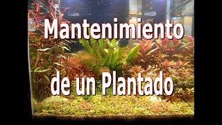 mantenimiento de plantado