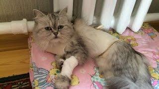 Новороссийск  Маруся после операции, ПИОМЕТРА у моей кошки!