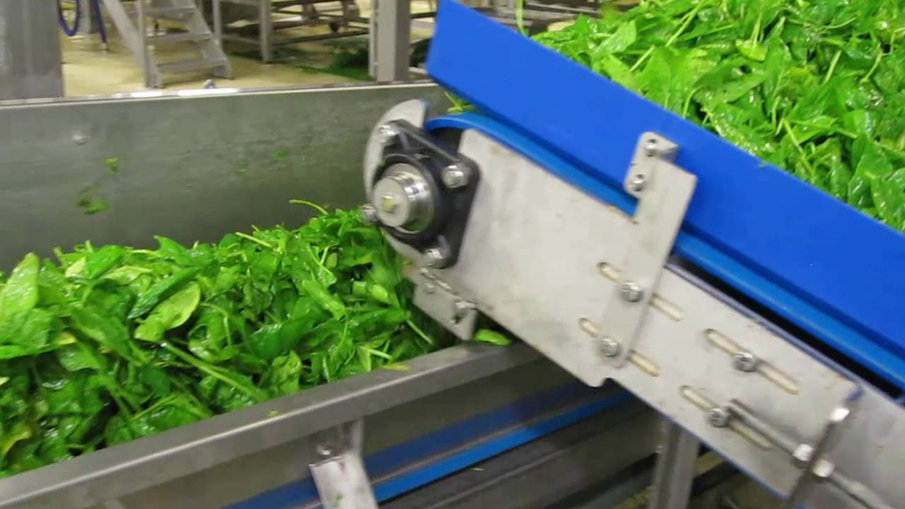 Spinach sorting machine Genius - TOMRA Sorting