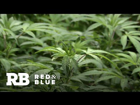 Recreational Marijuana On Hold In New York