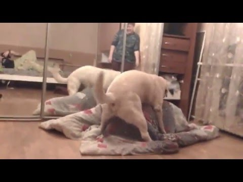 Видео Порно пес ебет телку