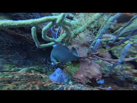 Diving In Roatan December 2019   HD 1080p