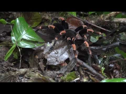 World Travel : Trip 129 : Costa Rica, Monteverde Cloud Forest - Spiders and Hummingbirds