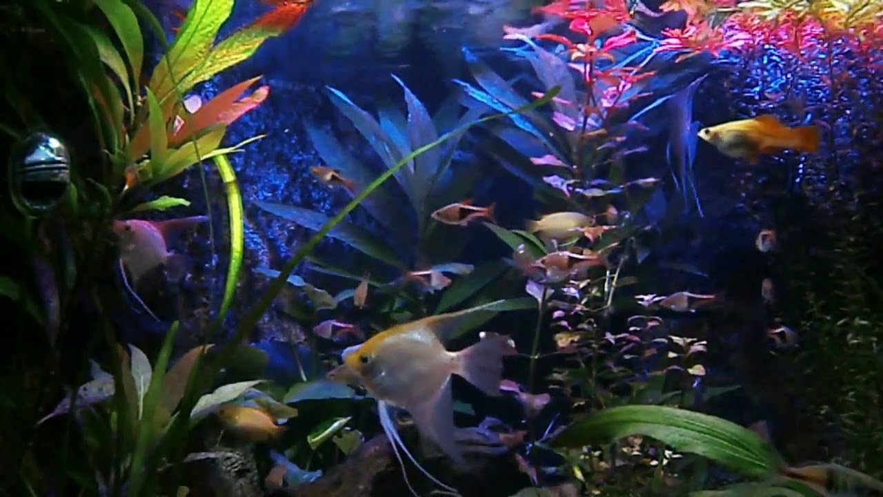 aquarium led verlichting youtube