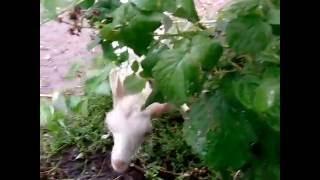 видео Где купить козу