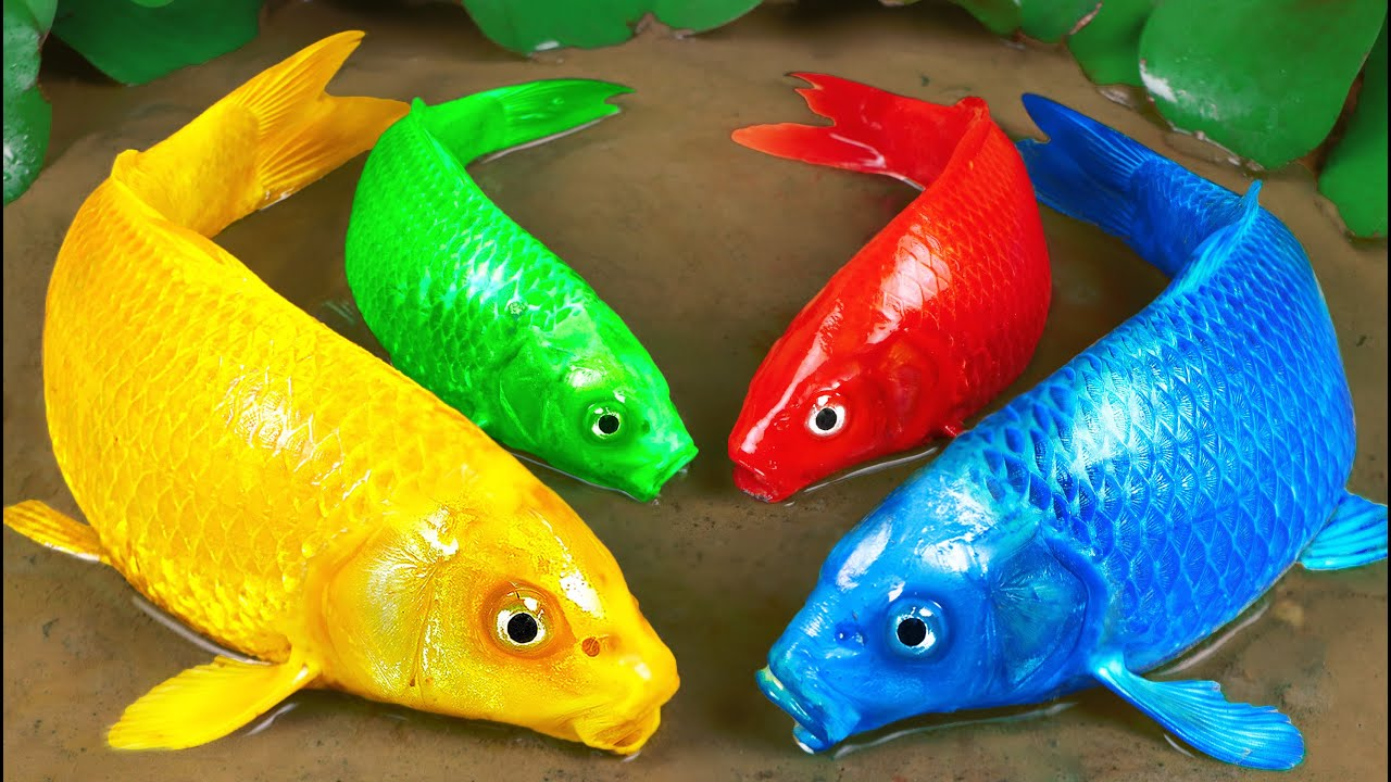 Download Stop Motion Experiment ASMR   Colorful KOI Fish Trap Catfish With Scorpions Cooking Under Primer Mud