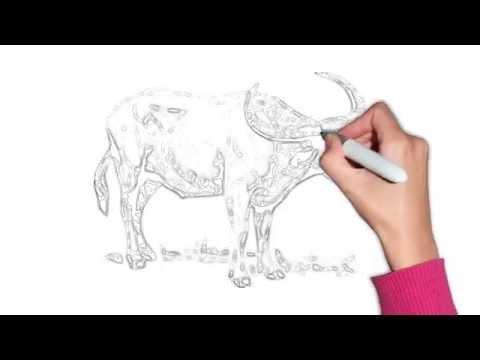 วาดรูปควาย Buffalo drawing