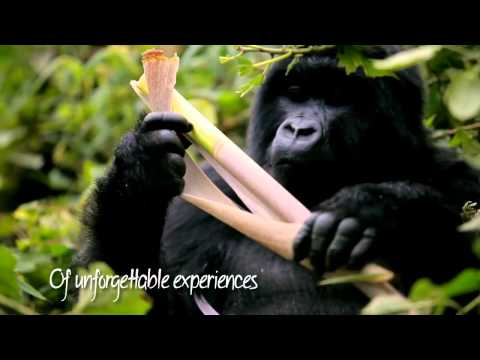 Discover Rwanda - a land of unforgettable experiences.