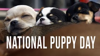 It's National Puppy Day...Need We Say Anymore?