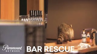 Bar Rescue: Is That a Raccoon in the Bar?