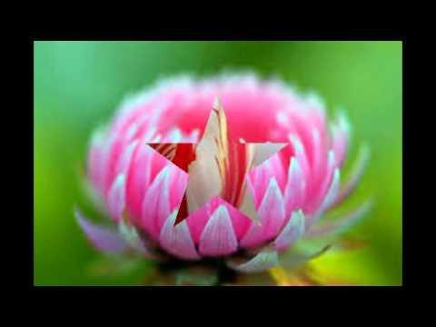 Las flores mas lindas y raras del mundo youtube for Las habitaciones mas raras del mundo