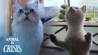 '¡Abre la puerta Dang!' Lo que hizo un gatito después de que su madre la dejara | Animal en crisis