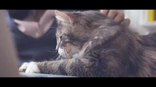 PERFECT FIT™ | Как обучить кошку простым командам?