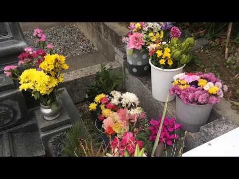 岡田有希子  2019年  新春のお墓まいり