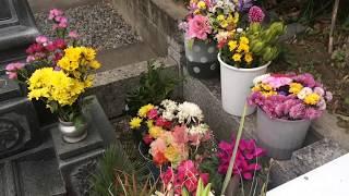岡田有希子  2019年  新春のお墓まいり 岡田有希子 検索動画 20
