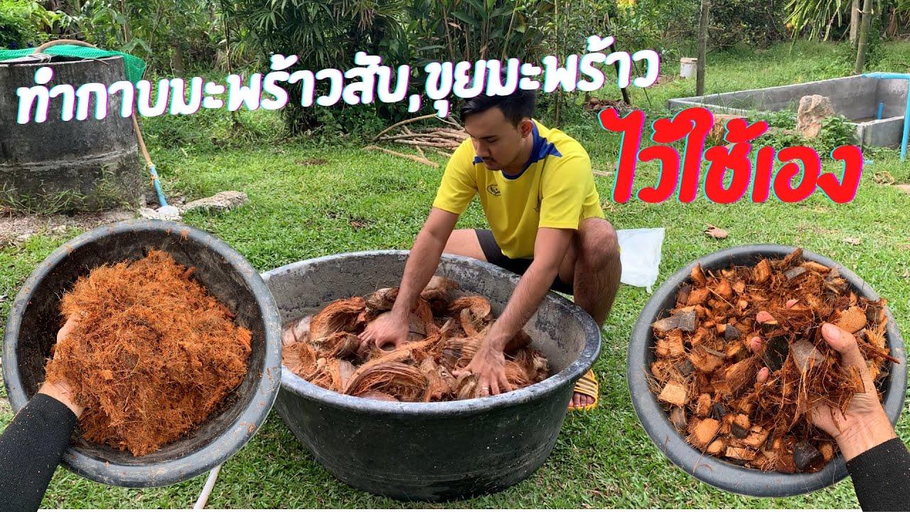 วิธีการทำกาบมะพร้าวสับ และขุยมะพร้าว ไว้ใช้เอง