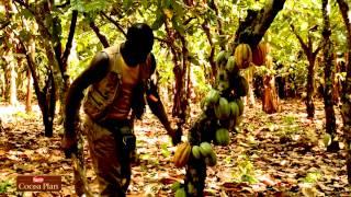 Plan Cacao Nestlé en Côte d'Ivoire
