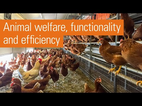 Modern aviary system for free range and barn egg production | Natura Step